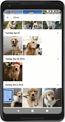 Kini Fitur Pengenalan Wajah Pada Google Photos Juga Dapat Kenali Hewan Peliharaan